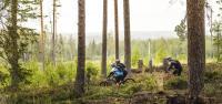Tre personer cyklar i skogslandskap sommartid.