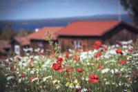 Blommar på äng i Tällberg.