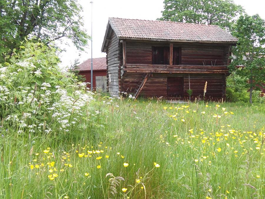 Timber loft, meadow with buttercups.